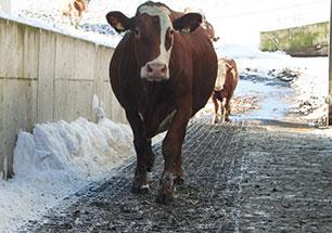 KRAIBURG MONTA Gummimatte gibt der Kuh Halt auf steilen Flächen