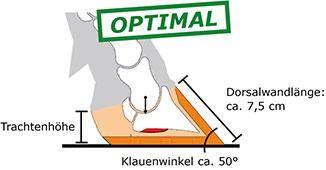 optimale Klauenform bei Kühen mit hohen Trachten, Klauenwinkel 50 Grad und Dorsalwandlänge 7,5 cm