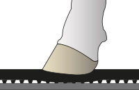 KURA Gummibodenbelag ist elastisch, die Klaue sinkt ein und gibt den Kühen Halt
