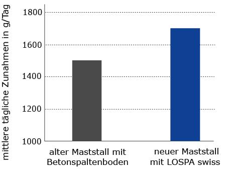 Deutlich höhere Gewichtszunahmen bei Mastbullen auf LOSPA swiss Gummiauflagen als auf Betonspaltenboden