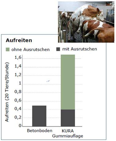 Aufreiten von Milchkühen häufiger auf Gummibelag als auf Beton