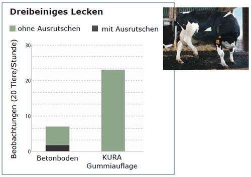 Dreibeiniges Lecken bei Milchkühen häufiger auf Gummibelag als auf Beton