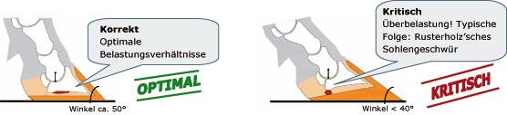 Optimale Belastungsverhältnisse durch korrekte Klauenform verhindern Überlastung / Sohlengeschwüre bei Rindern