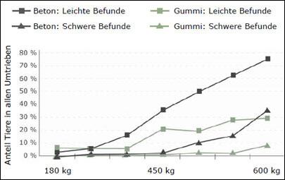 Schwanzspitzenverletzungen bei Mastbullen auf Beton und Gummi im Vergleich: weniger Befunde auf Gummi