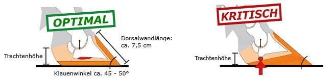 Klauenform: korrekte Klauenform mit Winkelung und Trachtenhöhe gegenüber kritischer Klauenform mit zu niedriger Trachtenhöhe
