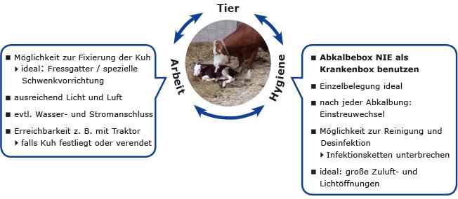 Anforderungen an die Abkalbebox mit dem Tier, Arbeitsaufwand und Hygiene im Mittelpunkt