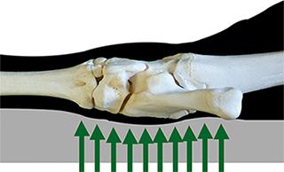 Kuhfuß auf weicher Liegefläche: Gelenksschonung durch größere Auflagefläche
