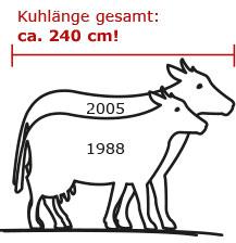Kühe werden immer größer und brauchen mehr Platz im Stall