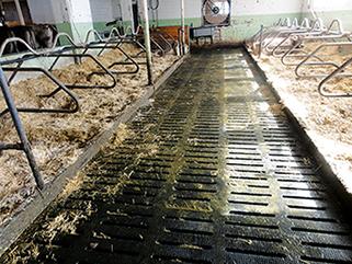 KRAIBURG KURA S Spaltenbodenauflage aus Gummi im Milchviehstall, Arenenberg, Schweiz