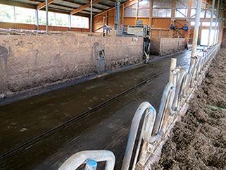 KRAIBURG KURA P Laufgangbelag aus Gummi im Milchviehstall, seit 2003