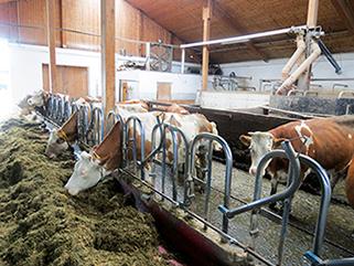 KRAIBURG KURA P Laufgangbelag aus Gummi im Milchviehlaufstall, seit 2002, Vorbuchner, Deutschland
