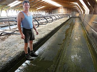 10 Jahre KRAIBURG KURA P Laufgangbelag aus Gummi im Milchviehstall, Herr Schmucki, Schweiz