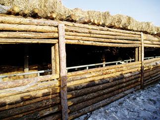 Milchviehstall in der Mongolei: hier funktioneren KRAIBURG Liegematten aus Gummi auch bei extrem kalten Temperaturen