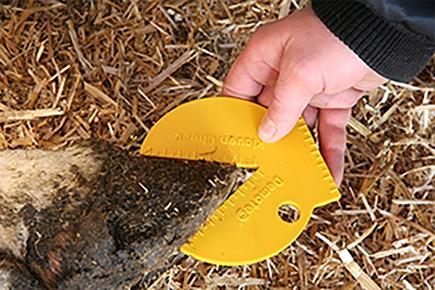 Mit der Nutzung von speziellen Gummimatten mit Schleifmittel in der Oberfläche hat sich die Klauengesundheit verbessert, der Klauenwinkel ist ideal