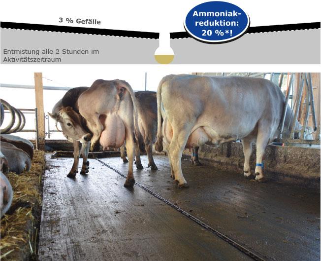 Ammoniakreduktion im Milchviehstall mit KRAIBURG Laufflächenmatten aus Gummi im Emissionsversuchsstall Agroscope, Tänikon, Schweiz