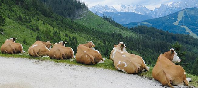 KRAIBURG Liegeboxenbeläge aus Gummi bieten Ihren Kühen besten Komfort