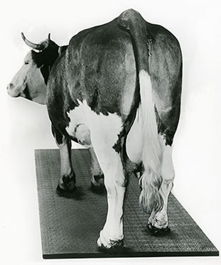 KRAIBURG Riefenstallmatte - Gummimatte für Kühe 1976