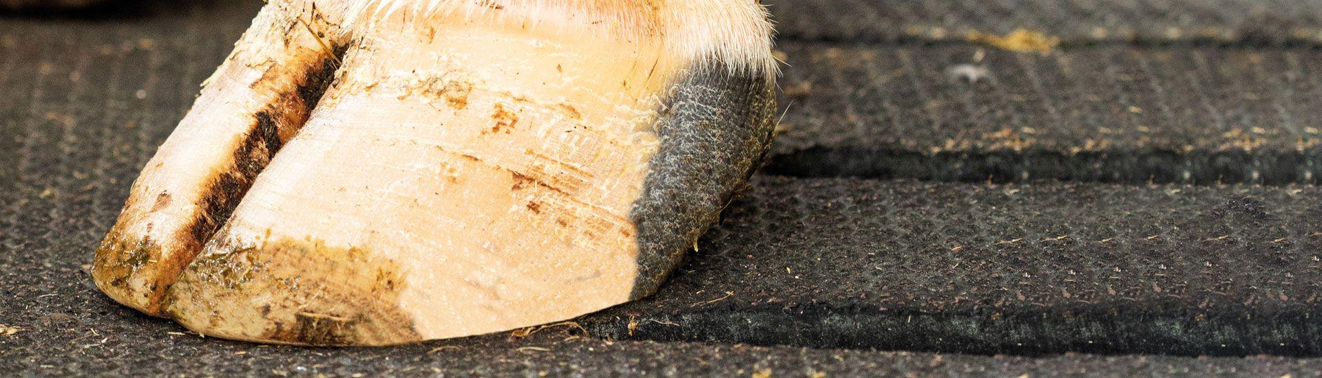 Gummimatten für Rinder auf Spaltenboden