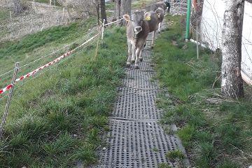 LOMAX Lochmatte aus Gummi  zur Bodenstabilisierung: Weg auf der Weide