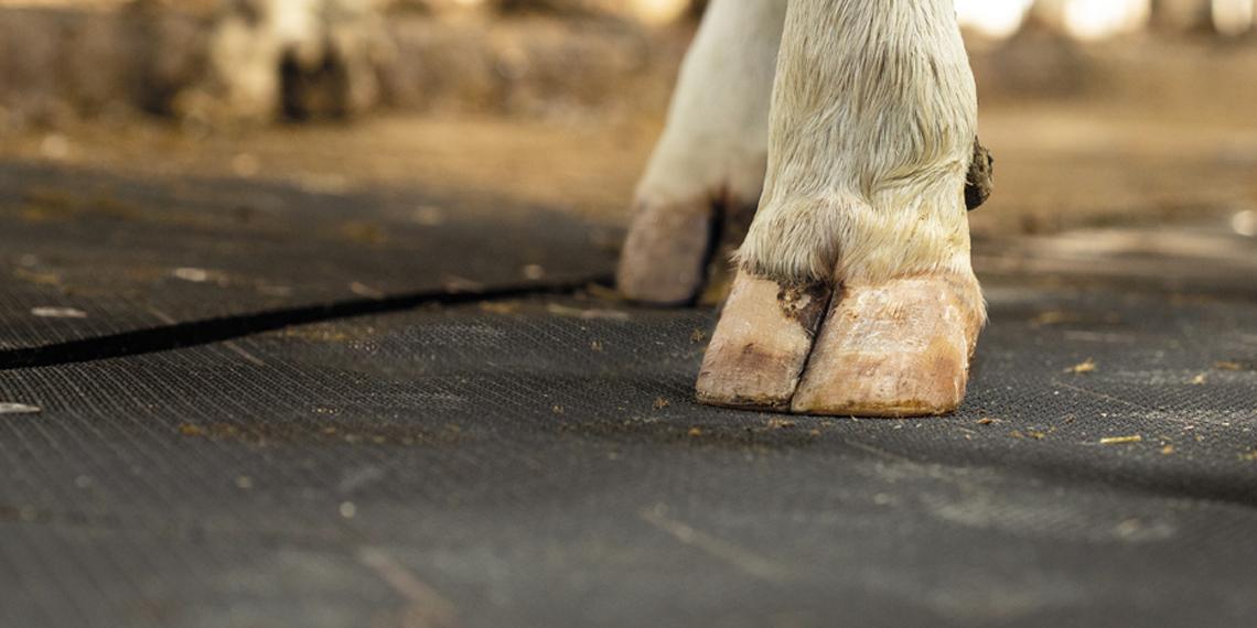 Trockene Laufflächen – widerstandsfähige Haut