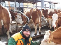 Kühe stehen weich und sauber