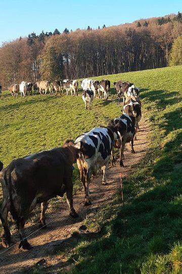 LOMAX Lochgummimatte zur Bodenstabilisierung und Befestigung von (matschigen) Treibwegen auf der Weide