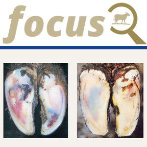 KRAIBURG focus: Vorbeugung subklinischer Klauenrehe
