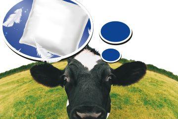 Wahlversuch: Kühe bevorzugen Tiefboxen mit POLSTA