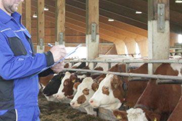 Fütterungs-Kontrolle am Tier