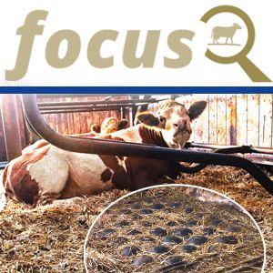 KRAIBURG focus: Tiefboxenkissen POLSTA: Strohverbrauch, Arbeitszeit, Tierkomfort