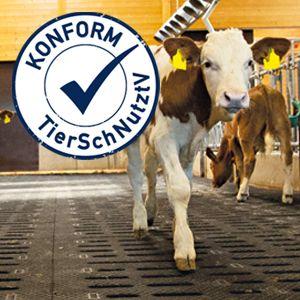 Geänderte Bodenanforderungen für Kälber - Neufassung der Kälberhaltungsverordnung (TierSchNutztV)