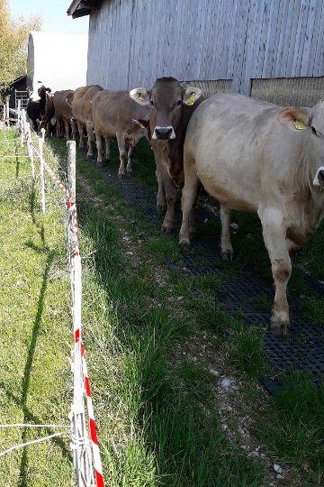 LOMAX Lochgummimatte zur Bodenstabilisierung und Befestigung von matschigen Treibwegen auf der Weide
