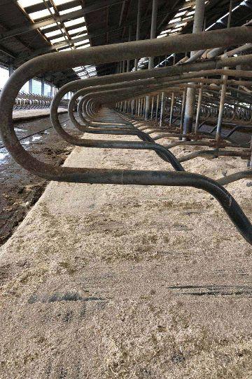 KRAIBURG KEW Plus Kuhmatratze auf Liegeboxen im Milchvieh-Laufstall