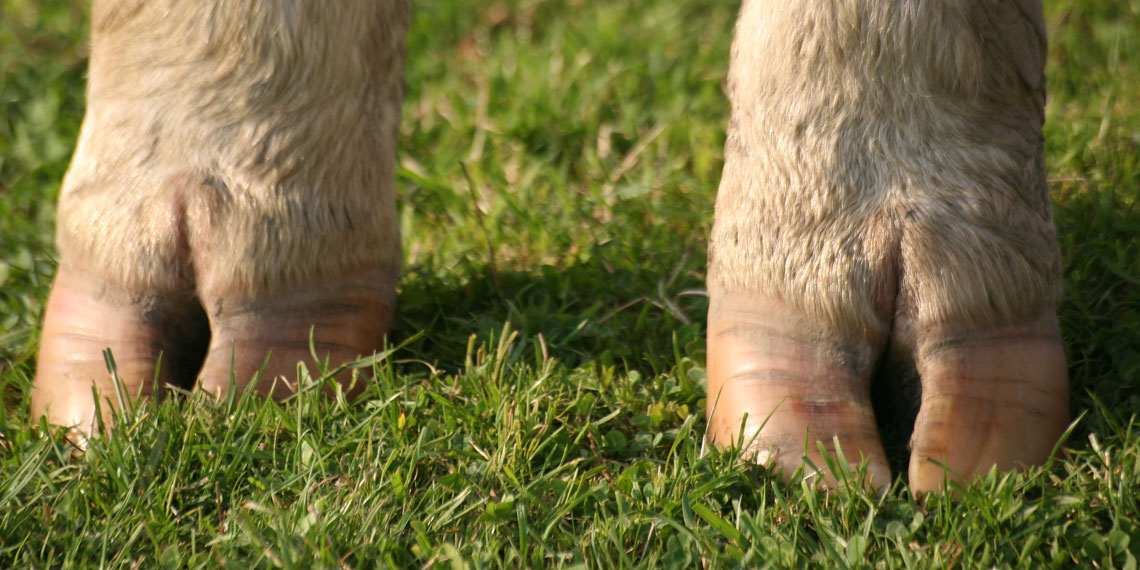 Soft conditions underfoot, less claw damage