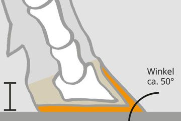 Claw position and abrasion
