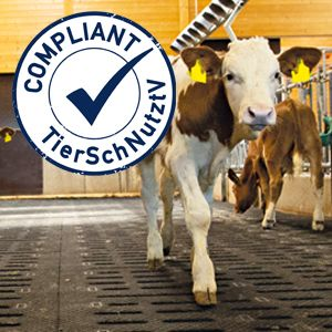 Changed floor requirements for calves – new version of the German ordinance on calf husbandry (TierSchNutztV)