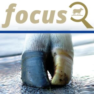 KRAIBURG focus: The outer claw has to be relieved!