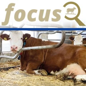 KRAIBURG focus: Cubicle flooring - is there a golden way?