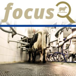 Hygiene in the milking parlour through proper cleaning