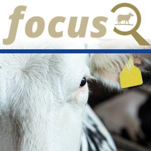 Calm in the barn – how do cows perceive their environment?