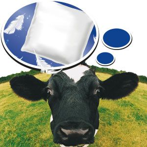 NEW: KRAIBURG POLSTA – the rubber cushion for the perfect deep litter cubicle